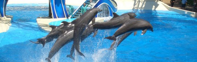 Dolphin Aqua Land